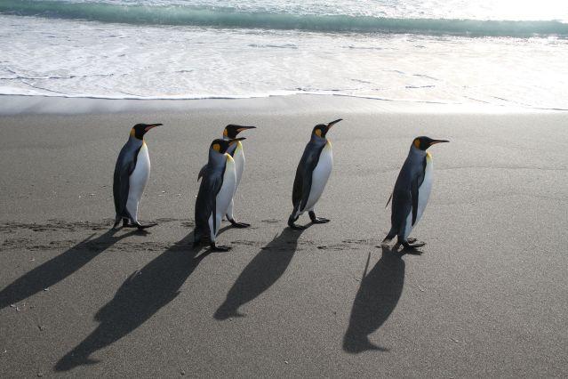 Voyage Iles Malouines, Géorgie du Sud et Antarctique
