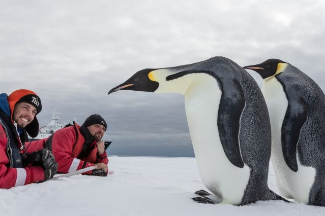 © Rolf Stange/Oceanwide Expeditions - Observation des manchots empereur - Antarctique