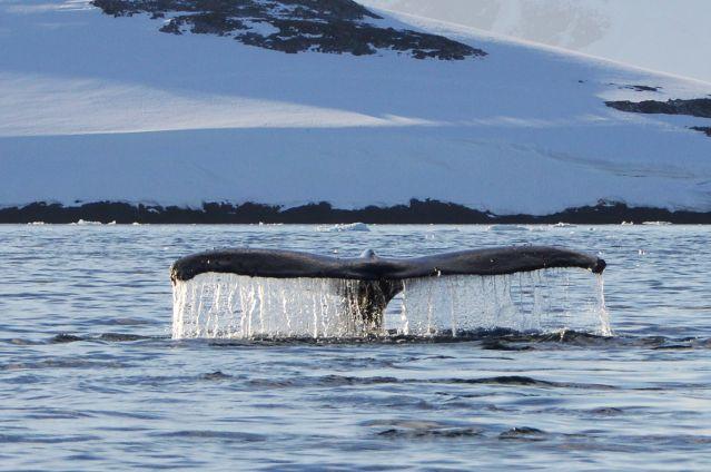 Voyage Antarctique : Terre de tous les extrêmes
