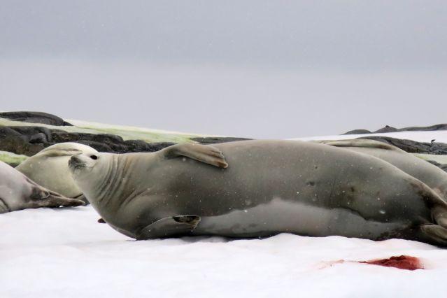 Expédition Péninsule Voile En Voile Antarctique Péninsule En Expédition Antarctique Voile awrEpPwq