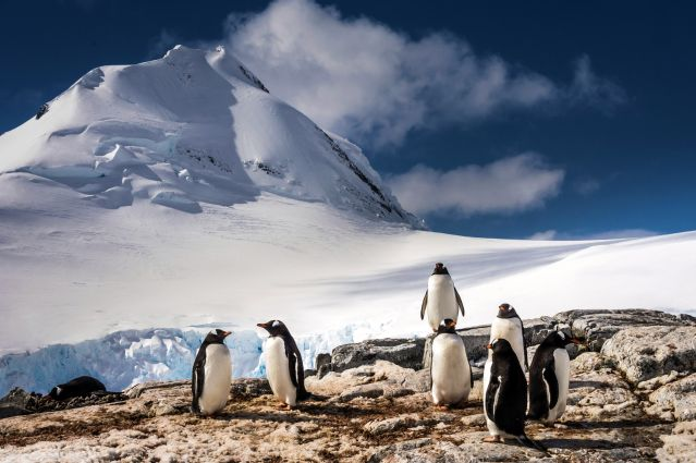 © Manchots Papous - Antarctique - OceanWide Expeditions