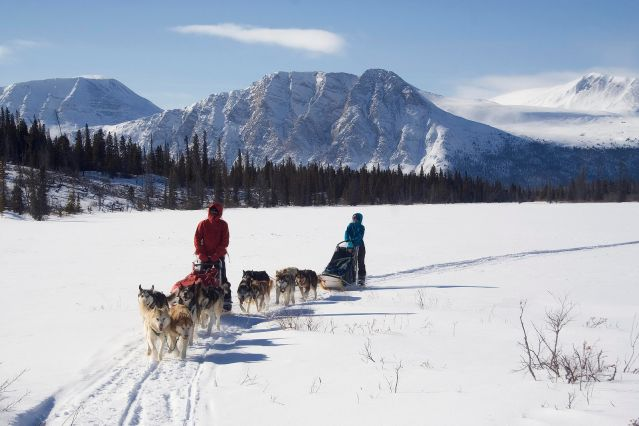 © Sky High Wilderness - Chiens de traineau dans le Yukon - Canada