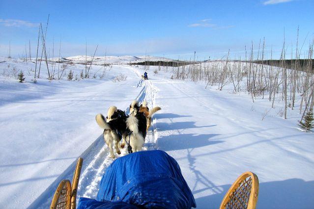 Traîneau à chiens dans les forêts du Québec - Canada