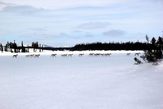 © Raid en traîneau à chiens - Québec - Canada - Jimmy Hery