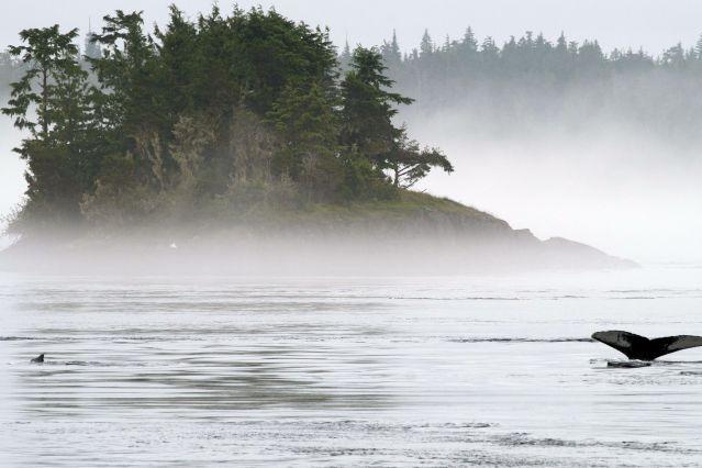 Voyage Kayak et baleines de l'île de Vancouver
