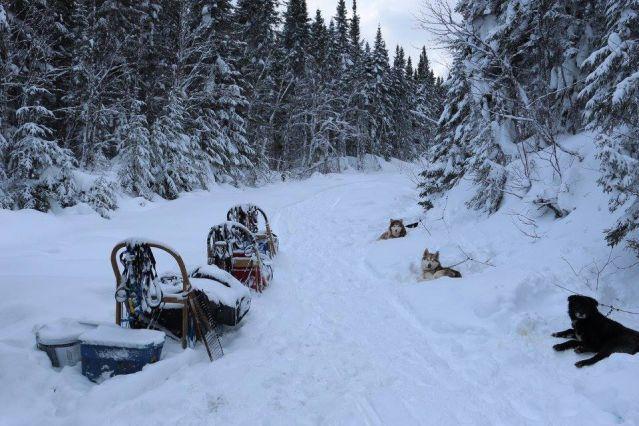 Voyage Traîneau à chiens dans les forêts du Québec