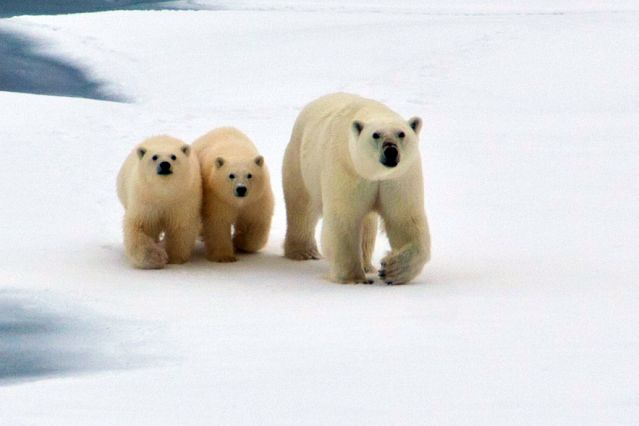 © Labrador - Canada - One Ocean Expeditions