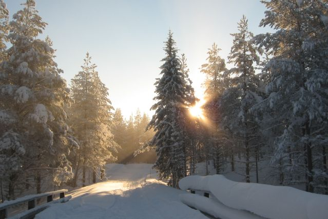 Voyage Ski de fond au cœur de la forêt boréale