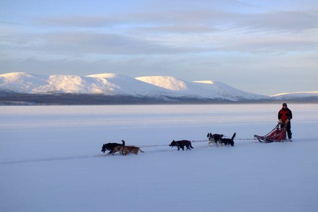 Voyage Raid lapon en traîneau à chiens