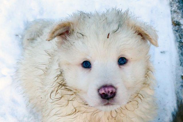 Voyage Aventures en famille sous les aurores de Laponie
