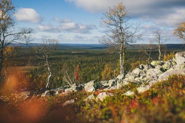 Voyage Un été en Laponie