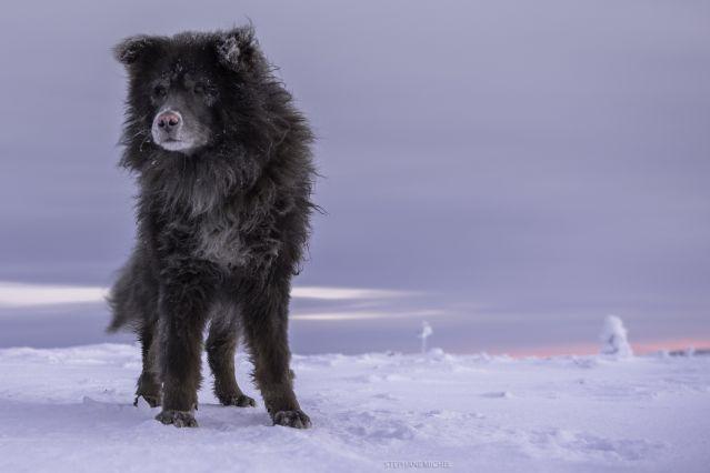 Voyage Objectif lac Inari en traîneau à chiens