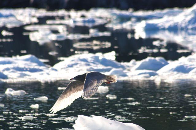 Voyage L'ouest arctique : Canada et Groenland