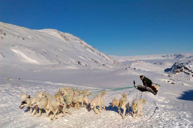 Voyage Traîneau à chiens en baie de Disko