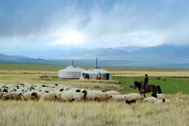 Voyage Sur les traces des gazelles de Mongolie