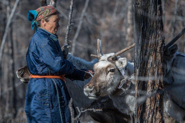 Les Tsaatan, un peuple d éleveurs de rennes - Mongolie