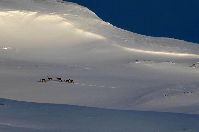 © Raid en raquettes - Norvège
