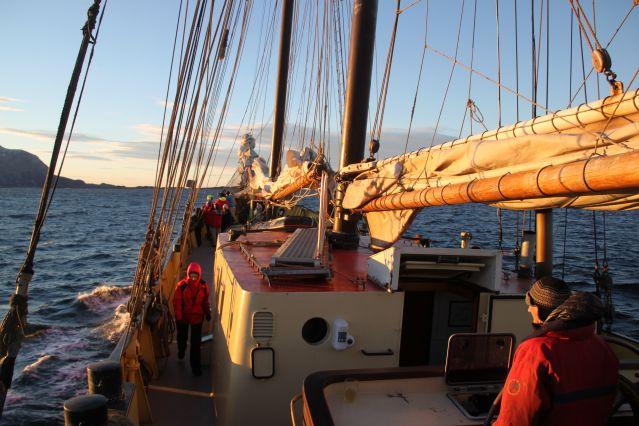Voyage Baleines et aurores boréales au départ d'Harstad