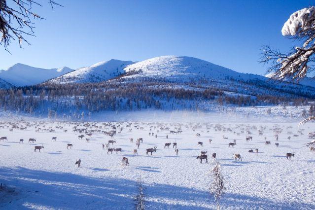 Voyage Chez les éleveurs de rennes de Yakoutie