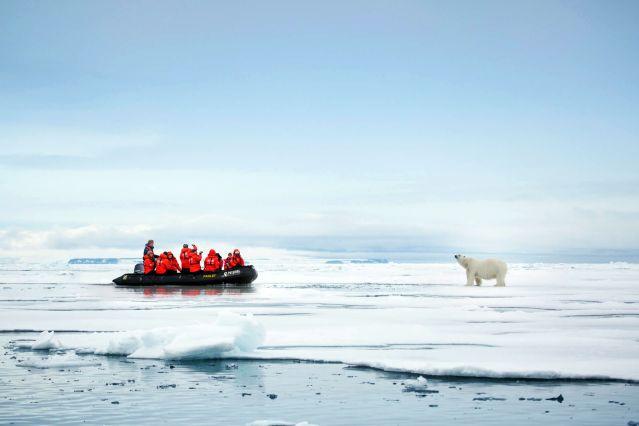 Ours polaire - François-Joseph - Spitzberg - Norvège