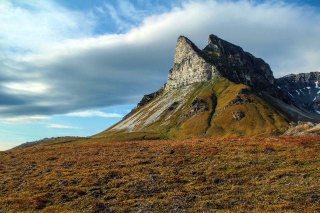 Alkhornet - Spitzberg - Norvège