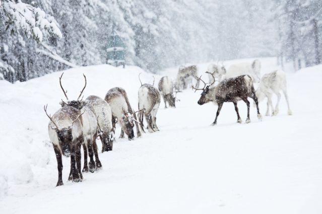© Rennes - Laponie - Suède