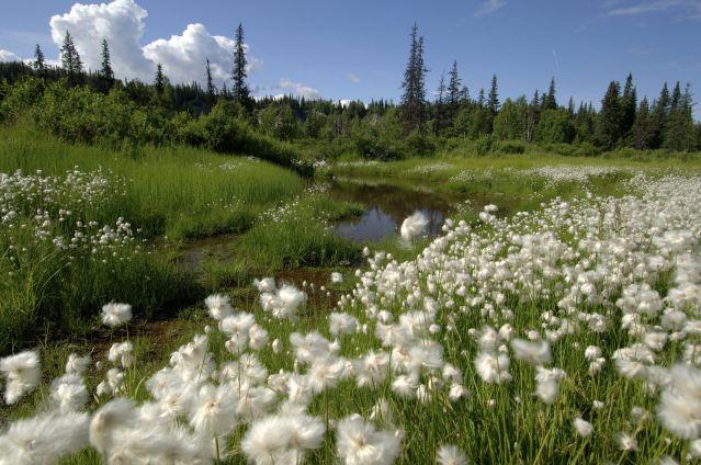Voyage L'Alaska nature