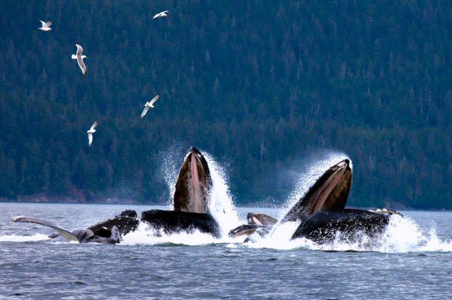 Voyage Les îles Aléoutiennes, entre Russie et Alaska