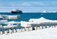 Antarctique : explorez le Grand Sud