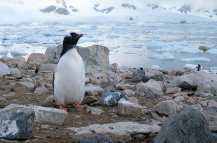 Découverte de l'Antarctique, le continent blanc