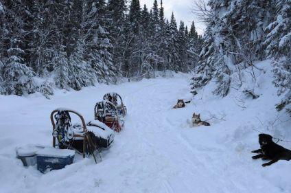 Traîneau à chiens dans les forêts du Québec