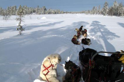 Immersion et aventure du Grand Nord