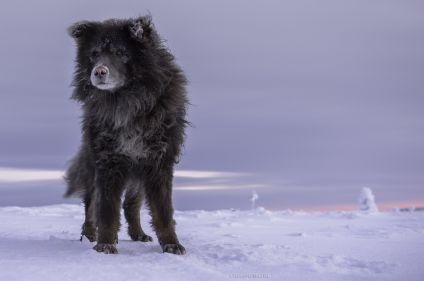 Objectif lac Inari en traîneau à chiens