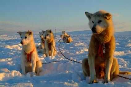 En traîneau à chiens avec les Inuit
