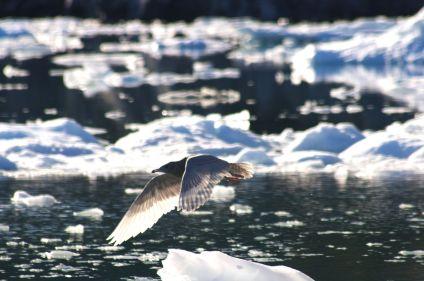 L'ouest arctique : Canada et Groenland