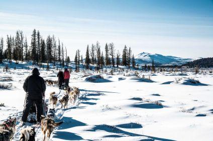 Traîneau à chiens en terre mongole