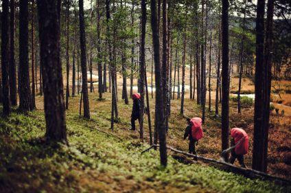 Découverte et aventure en Laponie suédoise