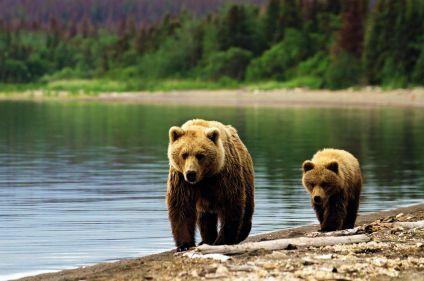 L'Alaska des chercheurs d'or