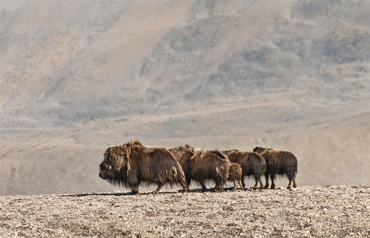 La faune observable... Passage du Nord-Ouest - ©Rob Stimpson
