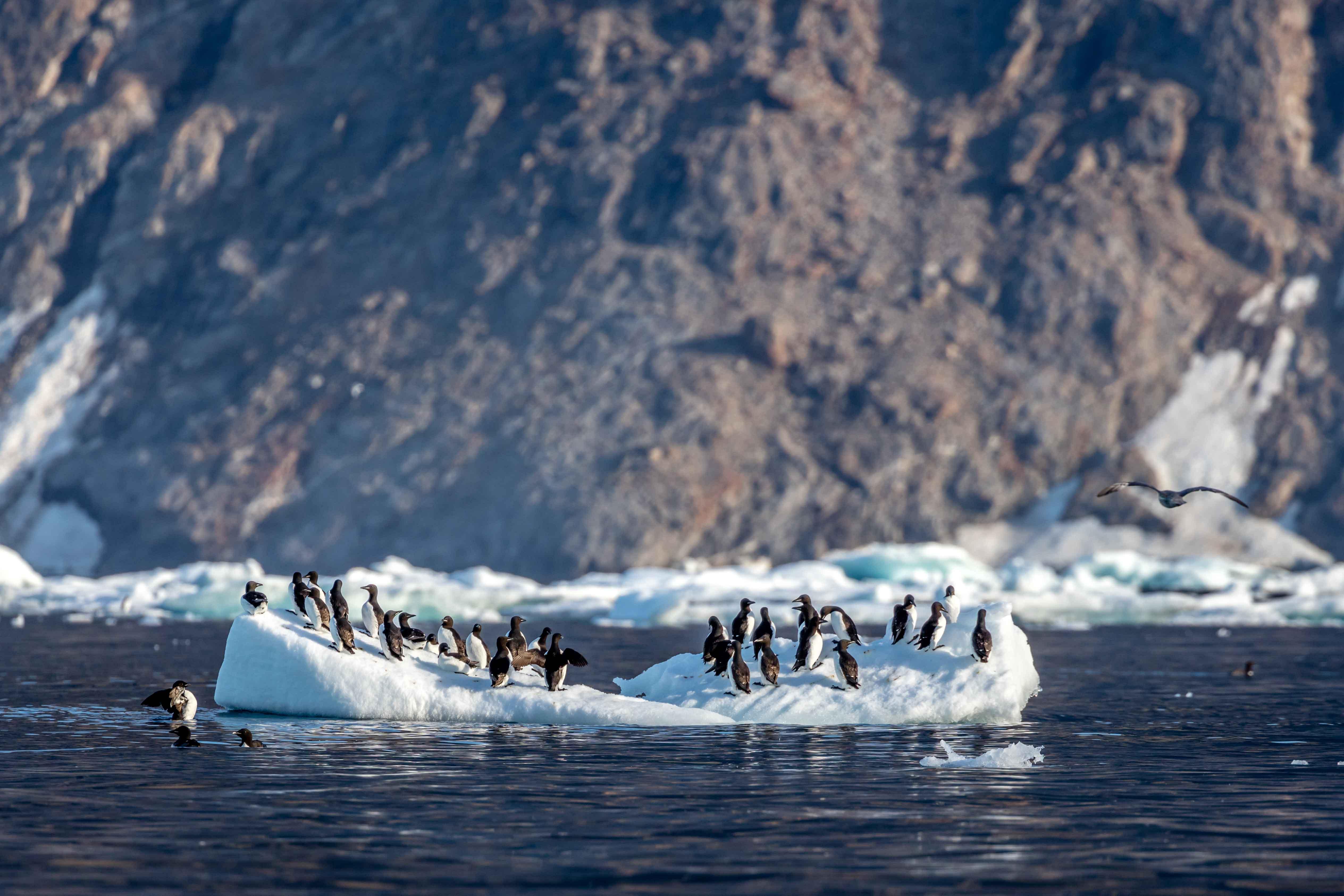 Passage du Nord-Ouest, Labrador, Canada - ©Roger Pimenta